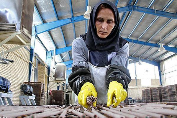 افزایش نرخ مشارکت اقتصادی زنان در بازار کار