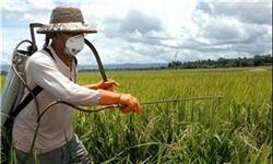 افزایش تولید محصولات ارگانیک در دستورکار دولت قرار گرفت