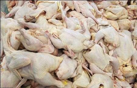 جمعیت مرغهای معدومی از ۲۷ میلیون قطعه گذشت