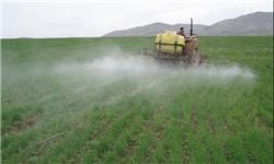 برنامه جهاد کشاورزی کاهش مصرف سم به ۴۰ لیتر در هکتار است