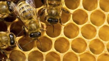 رتبه چهارم ایران در تولید عسل/جای برندسازی در صنعت خالی است