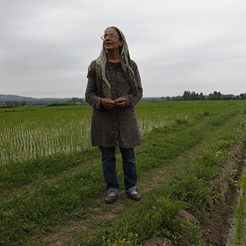 نگاهی به زندگی شیرین پارسی، زن کارآفرین و برنجکار نمونه کشور