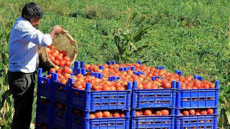 ناهماهنگی دولت با کشاورزان عامل اصلی گرانی محصولات است