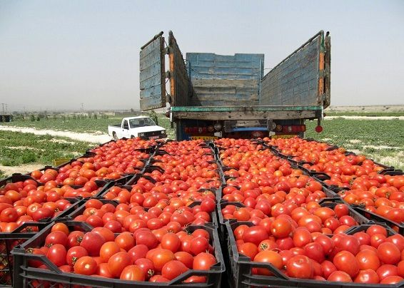 تحریمها، تجارت محصولات کشاورزی را با مشکل مواجه میکند؟