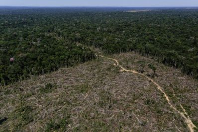 بیشتر شرکت های بزرگ در مقابله با جنگل زدایی ناموفق عمل کردند