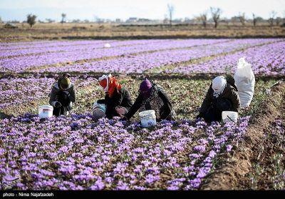 مهد گردشگری و صنایع غذایی