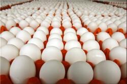 عوارض ۳۵۰۰ تومانی برای صادرات تخممرغ تمدید شد