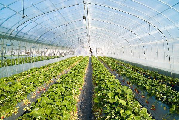 «شهرکهای گلخانه»، میانبُر جهش تولید و اشتغال در کشاورزی