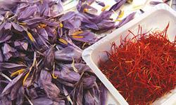 صادرات زعفران ايران از مرز 100 ميليون دلار گذشت