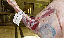 واردات گوشت از قطب جنوب